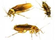 dedetizacao em santana 11 4112 3773 na casa verde 11 4112 3773 em toda zona norte, e grande sp de baratas,ratos,pulga,carrapato,percevejo,etc