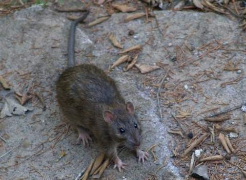 Dedetizadora agua rasa - 11 4112 3773 - dedetização de baratas,ratos,pulga,etc na agua rasa,ponte rasa,aguia de haia,etc