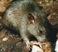 Dedetizadora na zona leste 11 4112 3773 de baratas,ratos,pulga,traça,carrapato, em itaquera,penha,vl matilde,sapopemba,sao miguel,sao mateus,etc