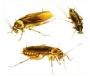 desratização em são bernardo dedetizadora 11 4112 3773 em sbc e todo abc dedetizadora de insetos em geral e pragas em santo andre, sao caetano,etc 4112 3773 ratos,pulga,cupim,bara