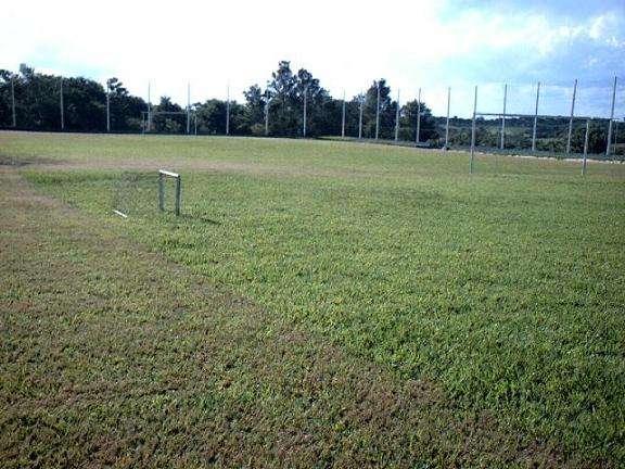 Fotos de Faça seu gramado ou campo de futebol c/ sementes c/ baixo custo 3