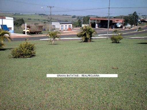 Faça seu gramado ou campo de futebol c/ sementes c/ baixo custo