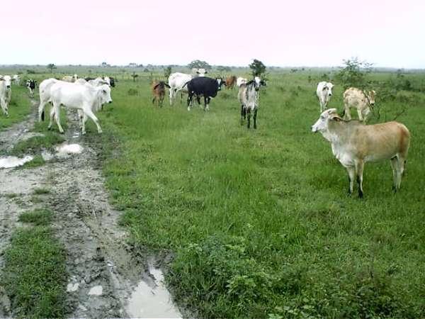520 hectares no sul da bahia a 12 km da br 101.