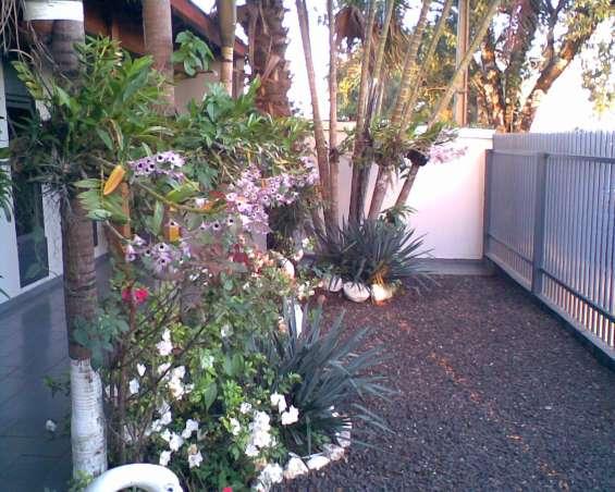 Orchids###venda de orquídeas comuns londrina